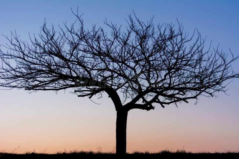 arbre sur le lever de soleil et bluesky images libres de droits