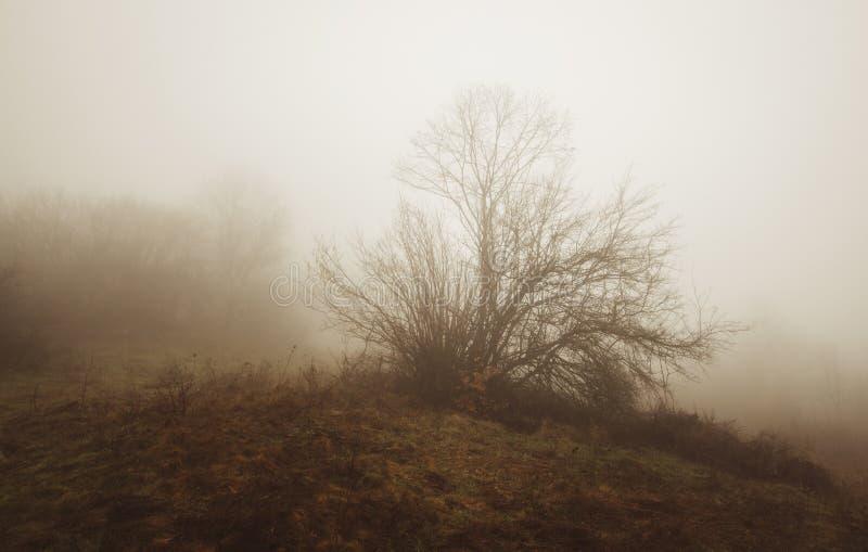 Arbre sur le pré d'automne photos libres de droits