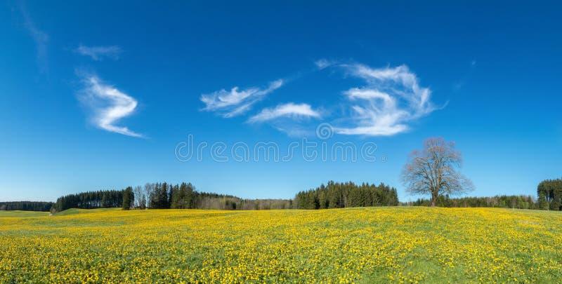 Arbre sur le pré jaune de fleur, le ciel bleu et les nuages blancs photos libres de droits