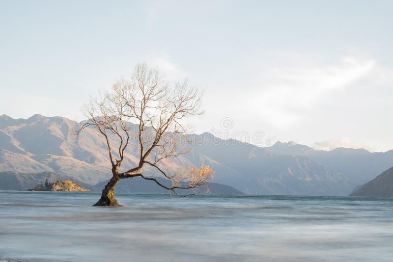 Arbre sur le wanaka de lac image stock