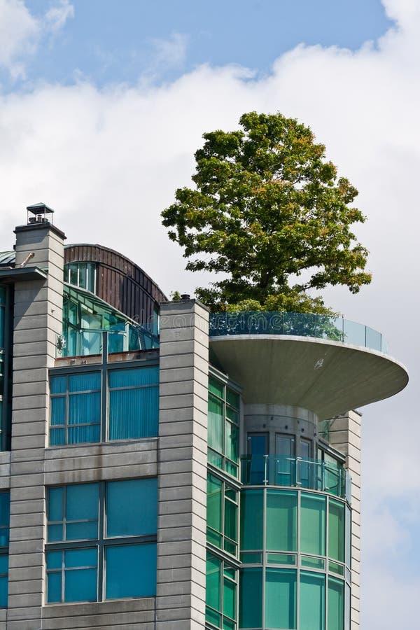arbre sur un appartement terrasse photographie stock. Black Bedroom Furniture Sets. Home Design Ideas