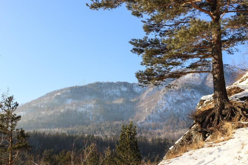 Arbre sur une falaise de neige images libres de droits