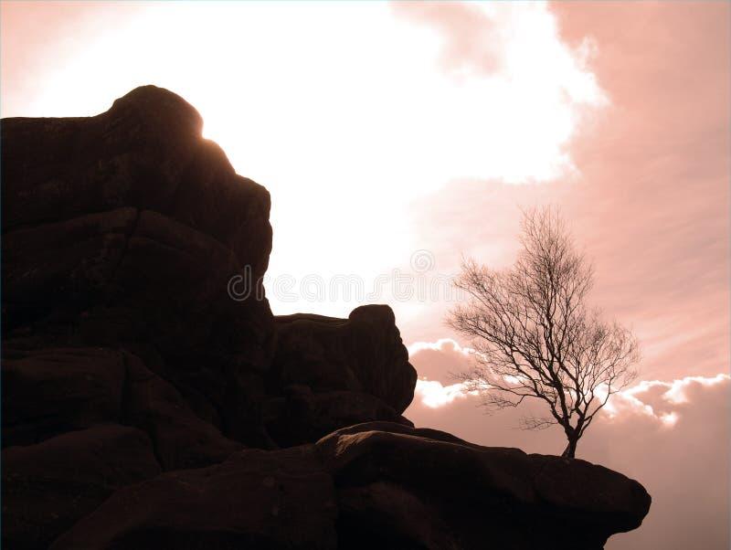 Arbre survivant parmi des roches images stock