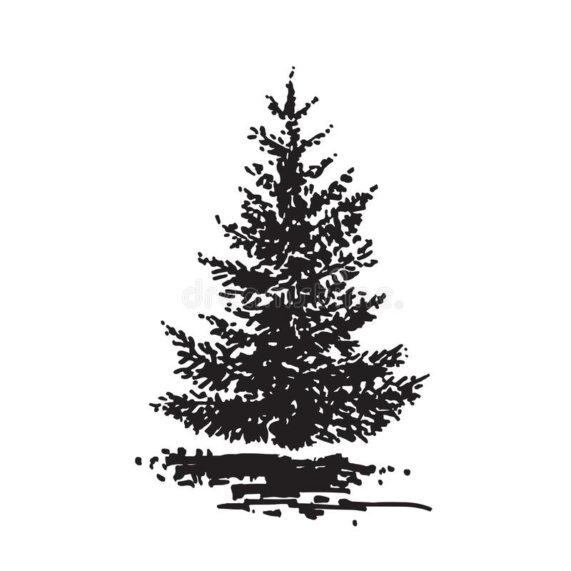 Arbre tiré par la main, sapin Image réaliste noire et blanche, croquis peint avec la brosse d'encre illustration stock