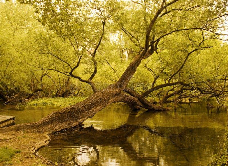 arbre tombé images libres de droits
