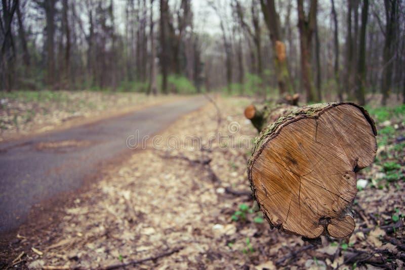 Arbre tomb? de c?t? le chemin forestier Ouvrir une session la for?t de pin images stock