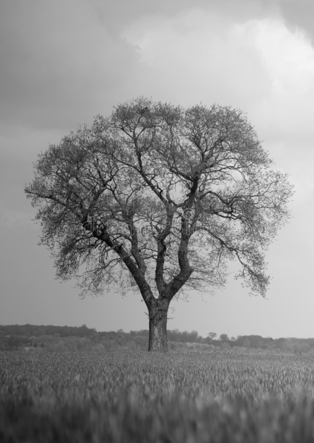 Arbre tracé les grandes lignes contre le ciel déprimé photographie stock libre de droits