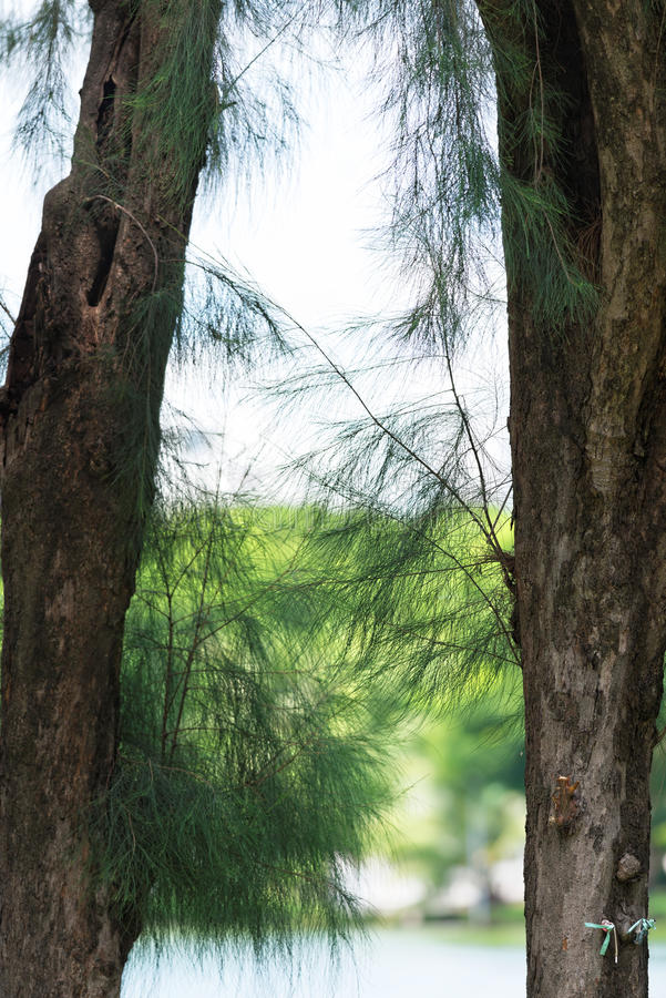 Arbre tropical photo stock