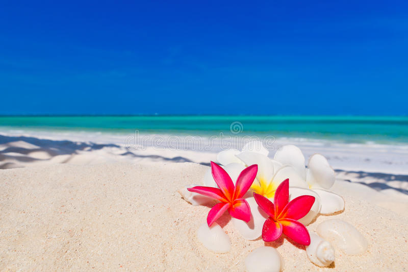 Arbre tropical de Zanzibar à la plage photo libre de droits