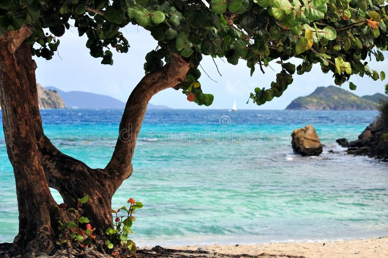 Arbre tropical sur une plage dans la rue Thomas photos stock