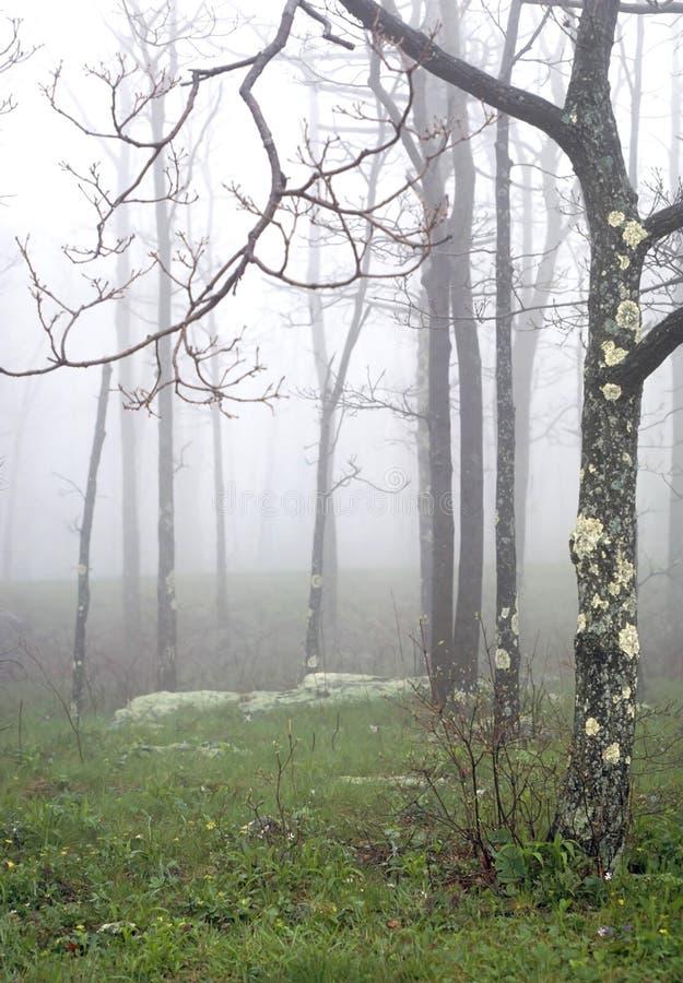 Arbre V de brume photos stock