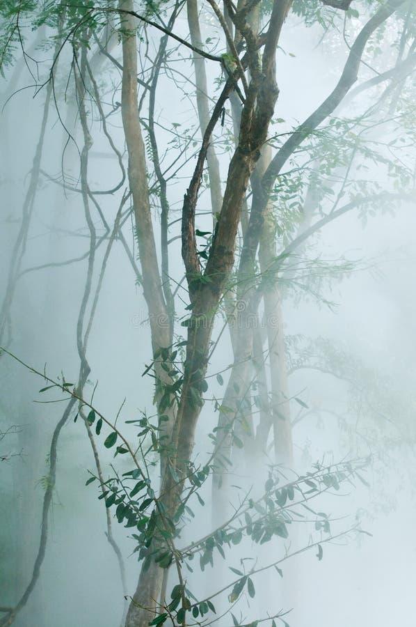 Arbre vert avec le brouillard à la source thermale photo libre de droits