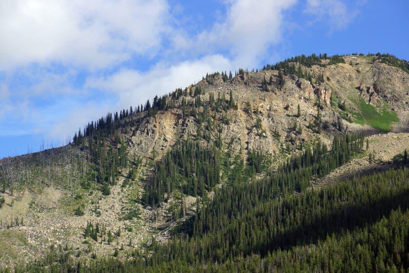 Arbre vert dans la montagne du passage de l'indépendance image libre de droits