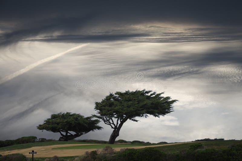 Arbre Windblown Images stock