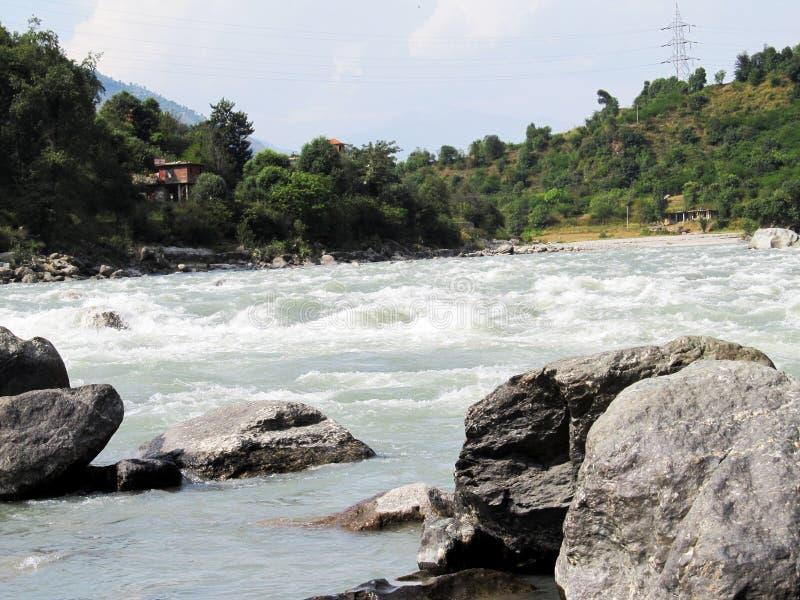 Arbres à côté de fleuve photographie stock libre de droits