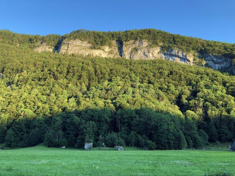 Arbres à feuilles caduques et forêts dans la gamme de montagne d'Alpstein et dans la région d'Appenzellerland images stock