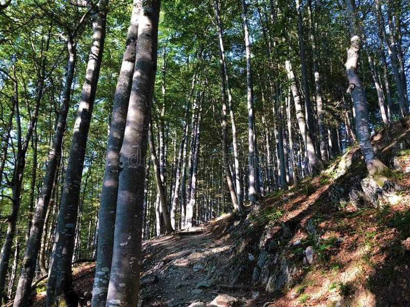 Arbres à feuilles caduques et forêts dans la gamme de montagne d'Alpstein et dans la région d'Appenzellerland photos libres de droits