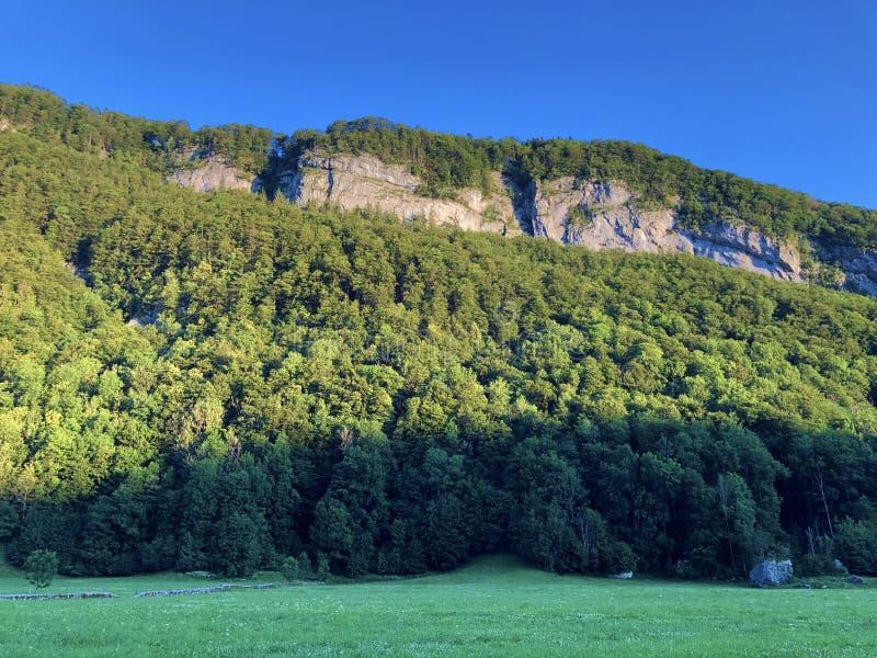 Arbres à feuilles caduques et forêts dans la gamme de montagne d'Alpstein et dans la région d'Appenzellerland images libres de droits