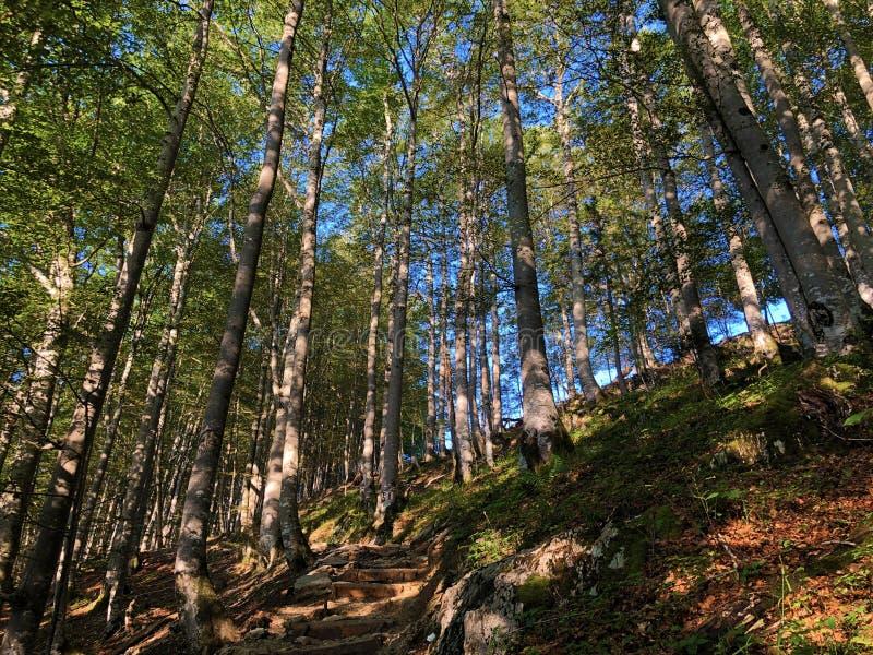 Arbres à feuilles caduques et forêts dans la gamme de montagne d'Alpstein et dans la région d'Appenzellerland image stock