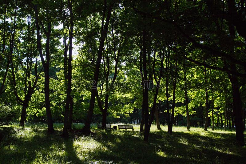 Arbres à feuilles caduques à un des parcs les plus anciens de Moscou photographie stock