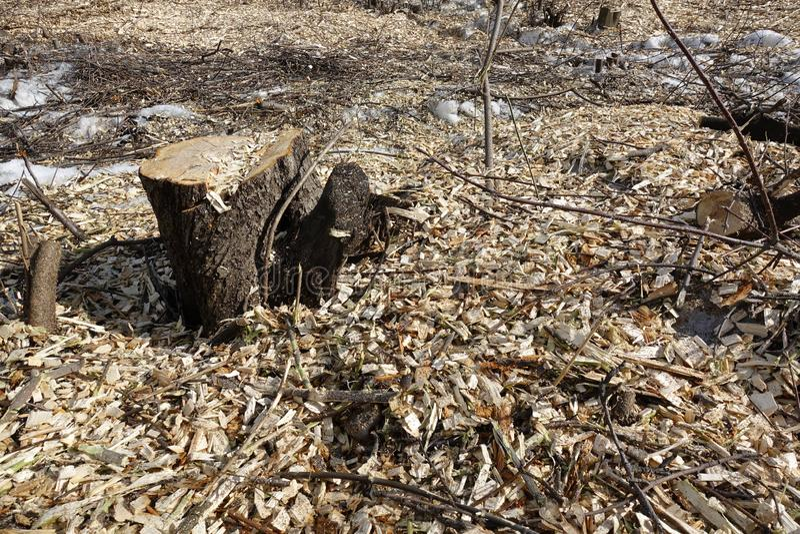 Arbres abattus Déchets de tronçon et de bois Le concept de la mauvaise écologie Coupe des arbres photos libres de droits