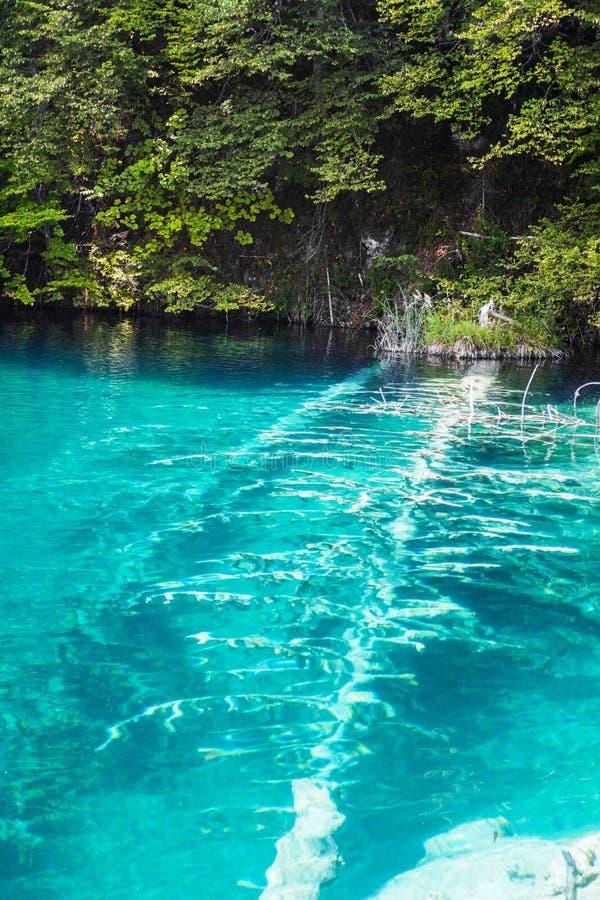Arbres abattus dans un lac de turquoise dans les bois Plitvice, parc national, Croatie photos stock