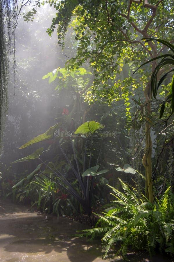 Arbres, arbustes et usines tropicaux stupéfiants de verdure avec les feuilles vertes à l'intérieur photo stock