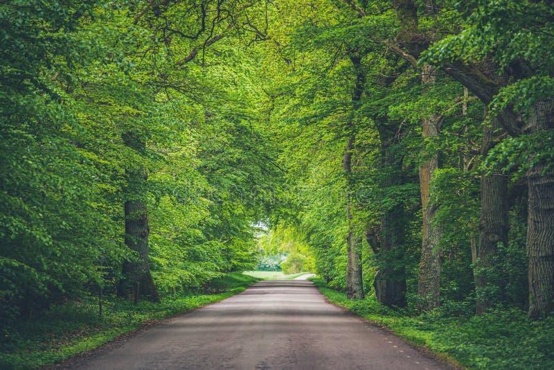Arbres arquant au-dessus de la route avec les lignes convergentes à l'horizon d'un long chemin par les bois Branches vertes accro photos libres de droits