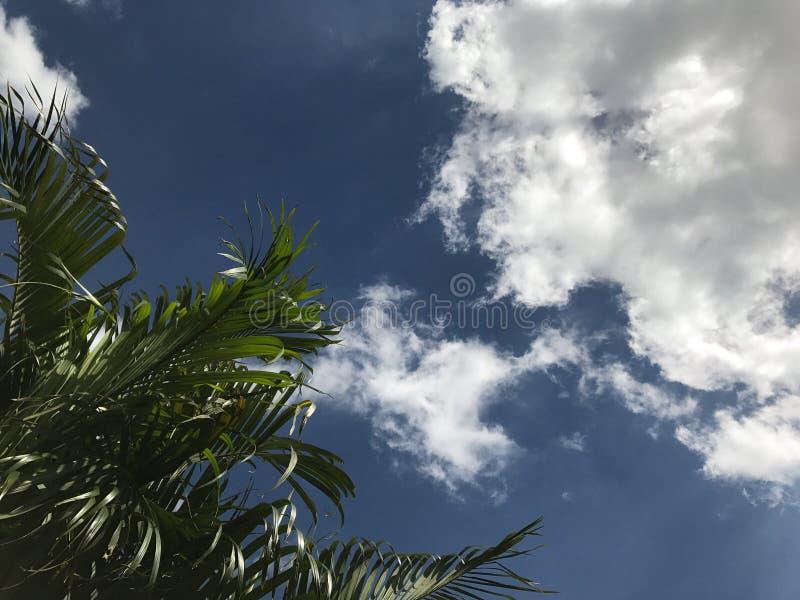 Arbres au coin avec le fond de ciel bleu images stock