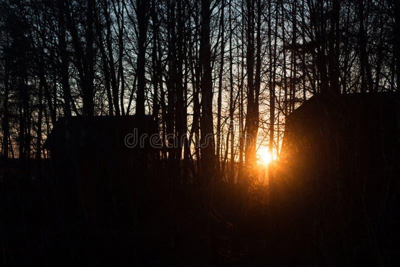 Arbres au coucher du soleil image libre de droits
