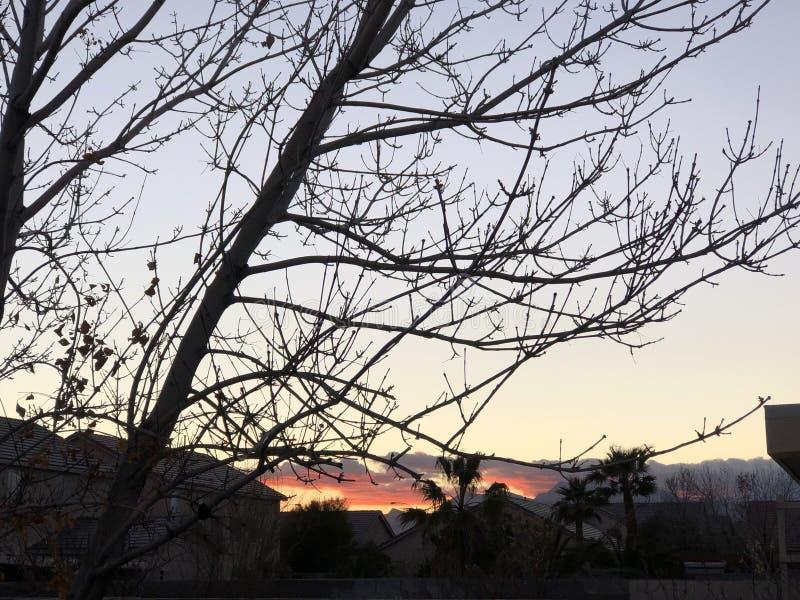 Arbres au coucher du soleil photos stock