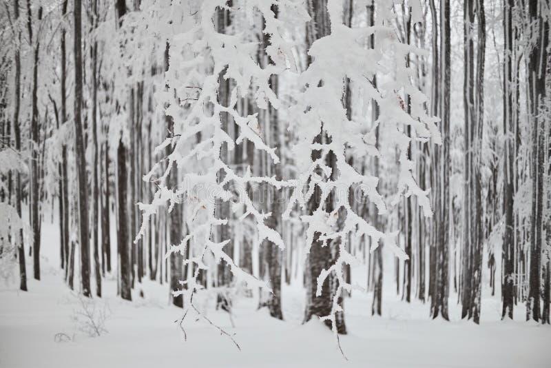 Arbres avec des branches pleines de la neige photographie stock libre de droits
