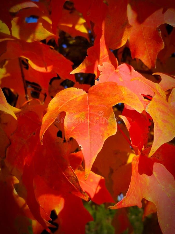 Arbres avec des couleurs oranges photographie stock libre de droits