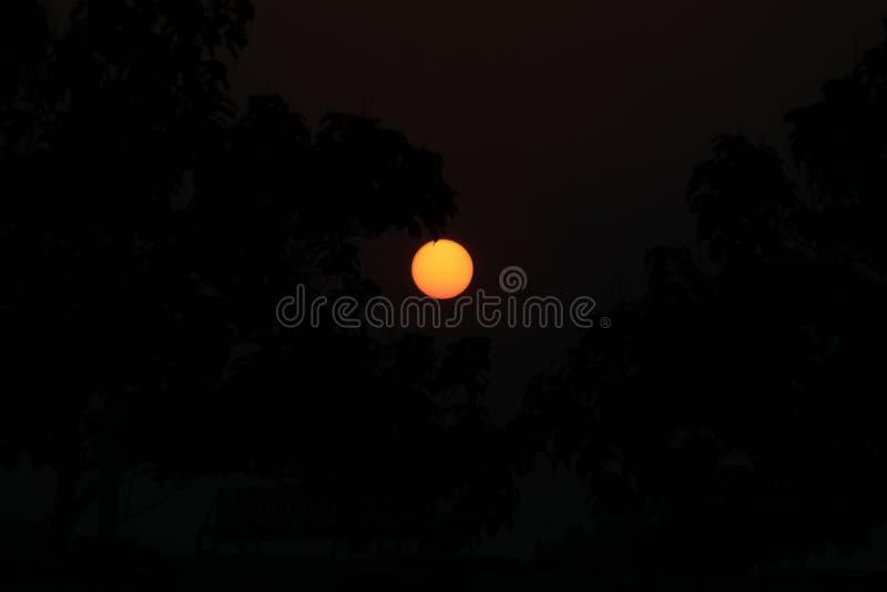 Arbres avec la lune photographie stock libre de droits