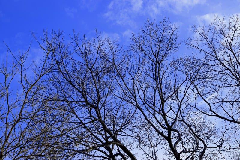 Arbres avec le ciel photo libre de droits
