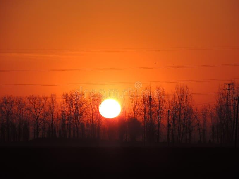 Arbres avec le soleil image libre de droits