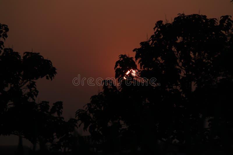 Arbres avec le soleil photo libre de droits