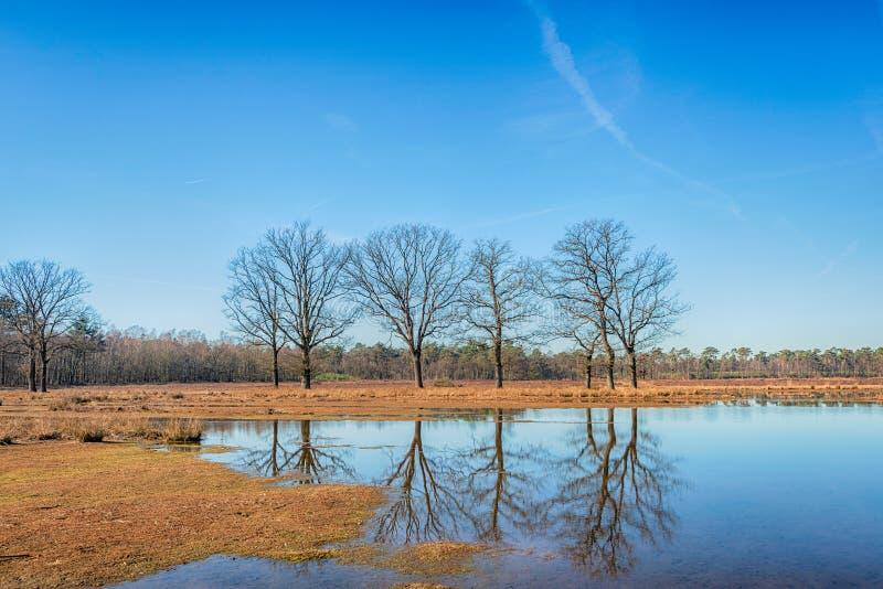 Arbres avec les branches nues reflétées dans l'eau lisse de miroir d'un simple dans l'hiver images stock