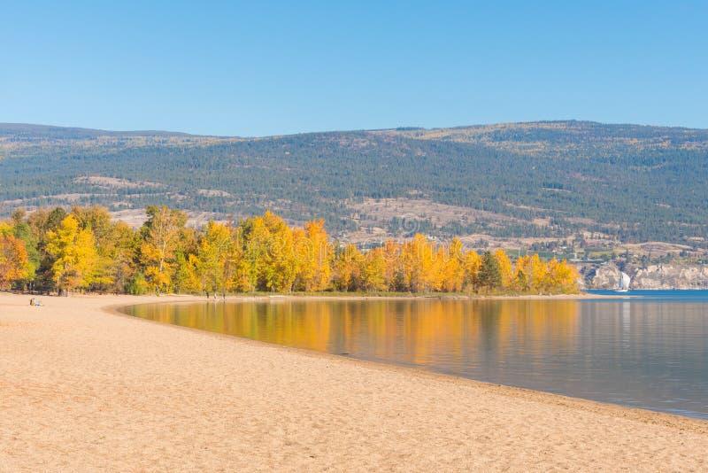 Arbres avec les feuilles d'automne jaunes et la plage sablonneuse reflétées dans le lac calme images stock