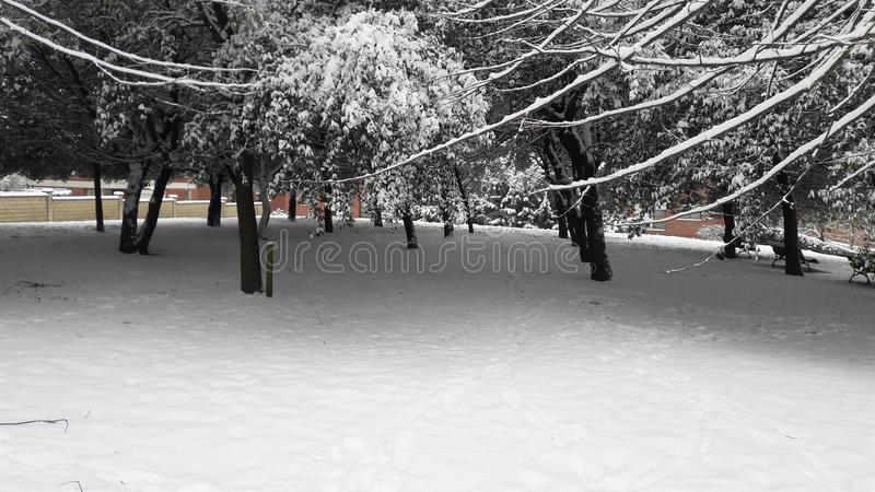 Arbres blancs images stock