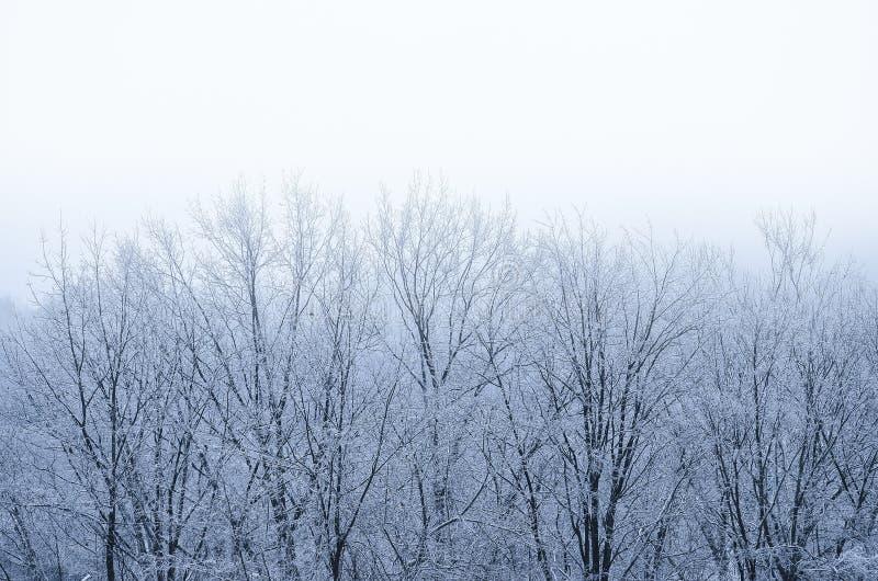 Arbres blancs givrés dans un jour neigeux photo libre de droits