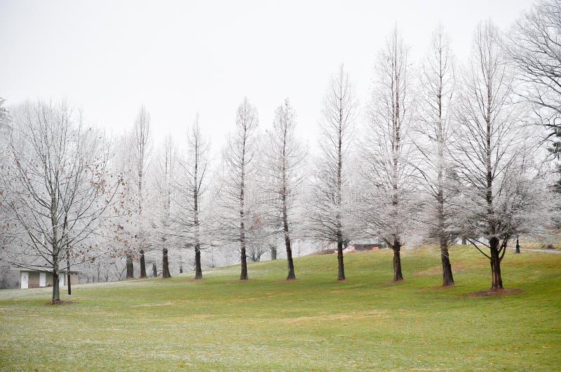 Arbres blancs givrés sur le champ d'herbe verte en hiver photographie stock libre de droits