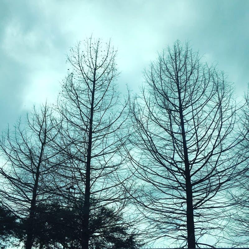 Arbres bleus orageux image libre de droits