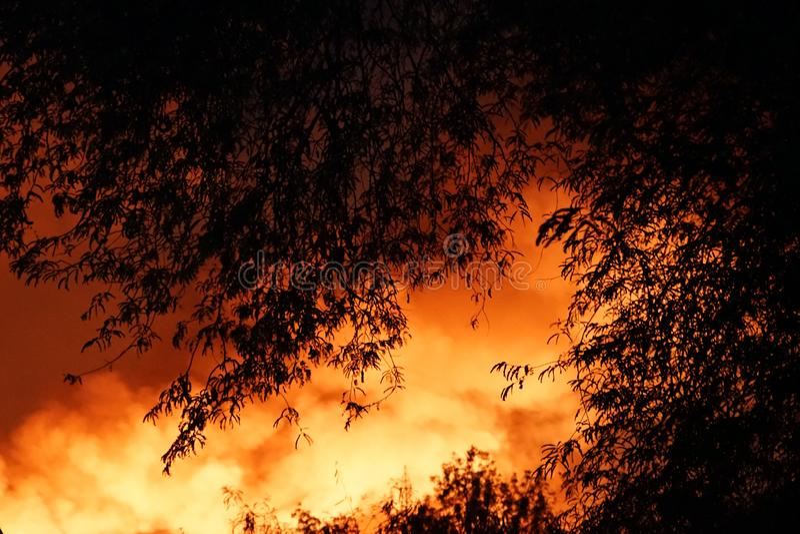 Arbres brûlants d'incendie de forêt avec de la fumée au-dessus du ciel la nuit image libre de droits