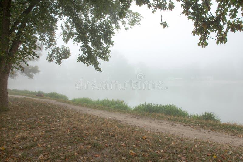 Download Arbres brumeux en parc image stock. Image du stationnement - 77151769
