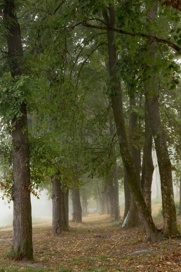 Download Arbres brumeux en parc photo stock. Image du lame, fleuve - 77152172