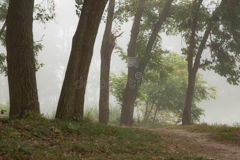 Download Arbres brumeux en parc photo stock. Image du vert, scène - 77152536