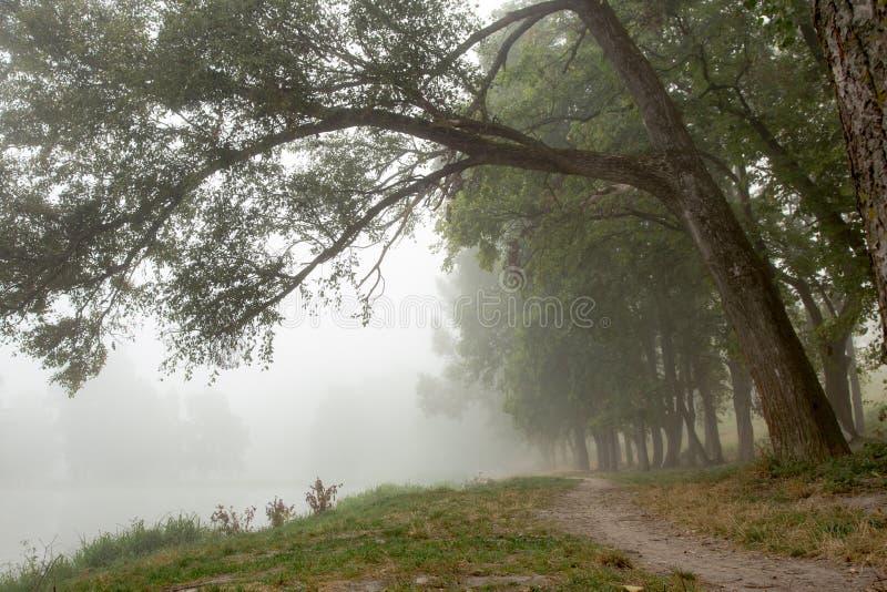 Download Arbres brumeux en parc photo stock. Image du magie, marais - 77152672