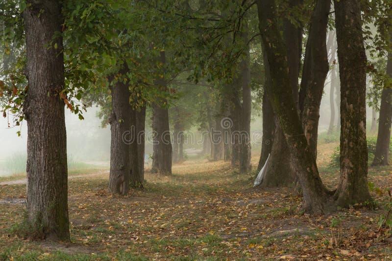 Download Arbres brumeux en parc photo stock. Image du réflexion - 77153106