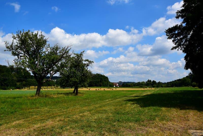 Arbres, champs, prés et un ciel ensoleillé bleu photographie stock